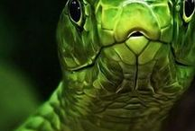 Reptilia / The life of reptiles with everything else that inhabits our planet.