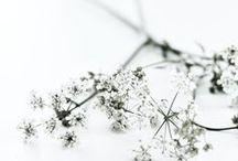 autres fleurs