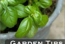 Garden / Food herb