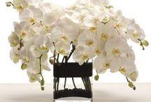 BLOOMS & BOUQUETS / Flowers