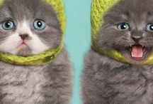 Snowball of cuteness / Little kittenes