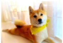 Shiba Inu Love / My little princess Inuki Macarooni the shiba inu.