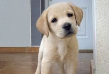 Mans best friend / All cute puppies and dogs