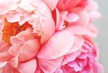 love & romance / je t'aime / by Cynthia Dartley
