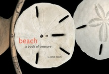 Beach: a Book of Treasure / Sand, seaweed, kelp, stones, driftwood and more.  A beautifully designed book to help us learn about what we find at the beach.