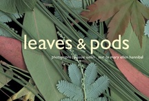 Leaves & Pods / A wonderfully designed book about why leaves are shaped the way they are. Written by Mary Ellen Hannibal