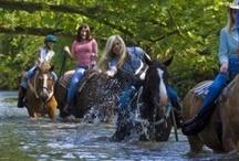 Horseback Riding / by Explore Rabun, North Georgia Mountains