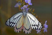 Birds - Blooms - Butterflies / by Mankee Frank