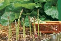 Asparagus / by gardenlady