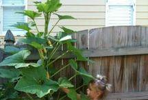 Squash / by gardenlady