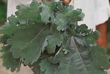 Kale / by gardenlady