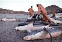 Trusler mod hajer