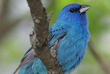 BIRDS: I Heart Birding / Birds Birding