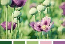 COLOUR / Color swatches