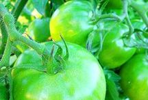 Green Tomatoes / by gardenlady