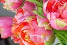Fabulous Flowers / Flowers in nature, in arrangements, as decor...and in unexpected places!