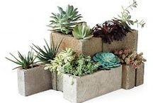 Cinder Block Gardening / Growing in Blocks
