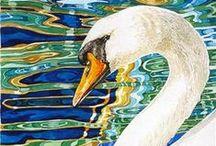 Лебеди  /  Swan