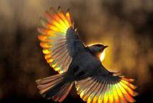 Птицы / Los pájaros