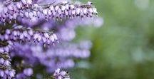 Flowers / nice flowers
