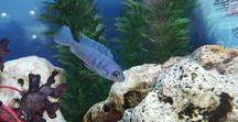 Aquariums / photo about Aquarium.please follow the board for more fresh pins.