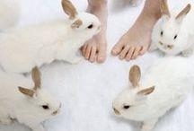 + conigli / more rabbits please