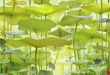 BG- Picture (Landscape)