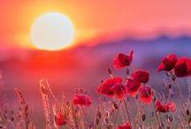 amazing red earth / Red like Autmn & Sunfire