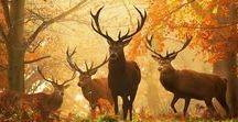 Paisirs d'automne