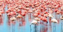 Flamingos / Who doesn't love Flamingos, this board is everything flamingo - photos, products, tattoos, gifts, anything that is a flamingo!