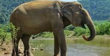 Elephants / Elephants are the most amazing creatures, they have big family units and feel things deeply.