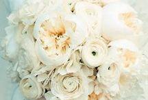 wedding / by Cathryn Vanarsdel