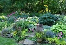 Dream Garden / Plants and related ideas / by Amelia Schroeder Haynes