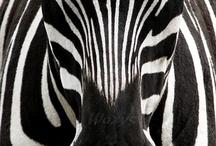 Black & White & Chiaroscuro / by Lena Kroupnik Interiors