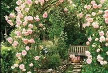 Pretty Garden Ideas / Love my garden