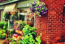 Flower shops we love! / Periwinkle delivers across the Greater Toronto Area.  Need to go further afield?  Try one of these talented florists.