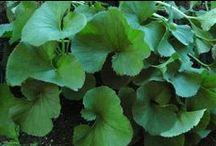 Plants - Lush Foliage