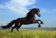 Horse / Equestrian Gallery / Horse / Equestrian Gallery