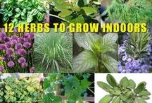 All Organic Gardening / Everything and anything related to organic gardening and organic practices in the garden!