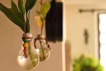 Plants @ Home / Bring a burst of green to your home with plants - indoors and outdoors!
