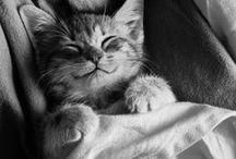 Furry Friends / cute animal friends