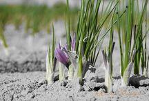 Agricultura con joseantonioarcos.es / El mundo rural en todas sus manifestaciones. De la tierra venimos, a ella pertenecemos y a su naturaleza hemos de respetar como germen de toda vida.