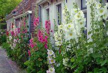 Fleurs, Plantes, Jardins - Entretien, Bouturage, Idées et Jolies Photos