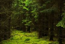 Forests Aesthetic