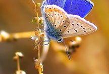 OtherKin ButterflyKin Aesthetic
