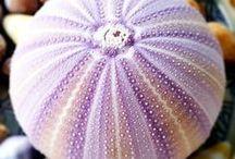 Sea Urchins Aesthetic