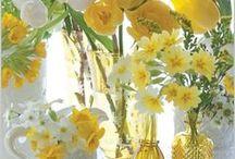 Yellow Flowers Aesthetic