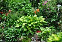 Lush Green Gardens Aesthetic
