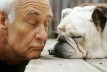 Les Seniors et les animaux de compagnie / #chiens, chats & co