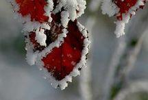 Snowy and Nice...